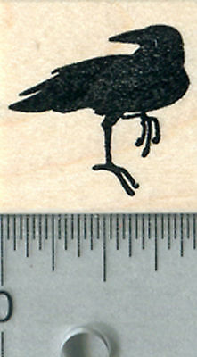 Raven Rubber Stamp, Small Black Bird, Crow A31010 WM