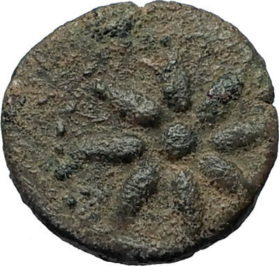 SOLOI as POMPEIOPOLIS in Cilicia 66BC Authentic Ancient Greek Coin GRAPES i67985