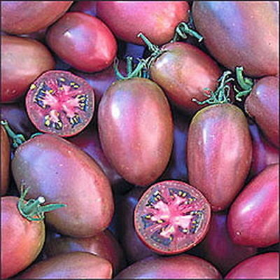TOMATO PURPLE RUSSIAN (30 SEEDS) HEIRLOOM, Sweet and flavorful!