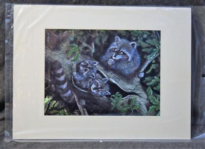 Vintage Matted Dufex Foil Art Print Raccoon Family New