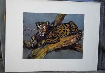 Vintage Matted Dufex Foil Art Print Leopard In Tree New
