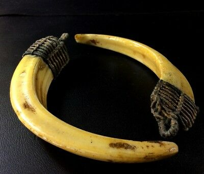 Real 2 Pig Teeth Hog Thai Amulet Pendant Wild Fang Boar LP Pern Power Talisman