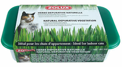 Herbe à chat dépurative naturelle Zolux
