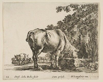 "Plate 12: a cow drinking from a stone trough  other cows to le,12x8""(A4)Poster"
