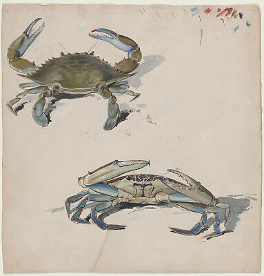 "Benjamin Day:Two Crabs 19th–20th century-16x12""(A3) Poster"