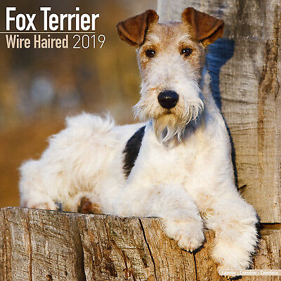 Wirehaired Fox Terrier Wall Calendar 2019 by Avonside