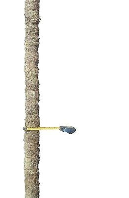 119 Cm Real Moss pole Made with real Moss unlike others made from Coir
