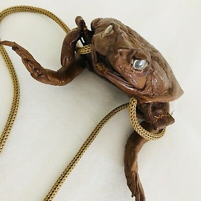 Taxidermy Bull Frog Purse Full Body Real Frog Coin Bag cord strap Steampunk