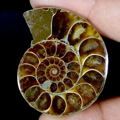99.20Cts Natural Split Ammonite Fossil Specimen Shell Healing Fancy Cab Gemstone