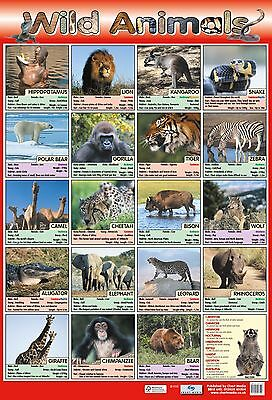 A2 Wild Animals Poster/ educational / learning / nature / wildlife