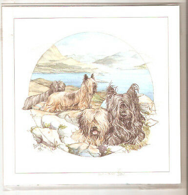 Skye Terrier Limited Edition Art Print by Barbara Hands Boz