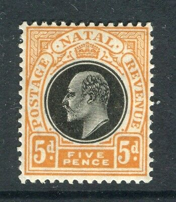 SOUTH AFRICA NATAL; 1904 early Ed VII issue fine Mint hinged 5d. value