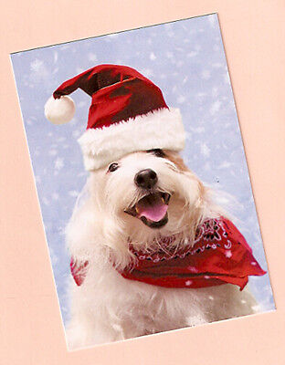 Bearded Collie Beardie Christmas Cards Box of 10 Made in the USA