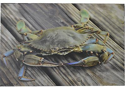 "Blue Crab Canvas 21""L Nautical Sea Life Fish Decor Hanging Wall Art King Lobster"
