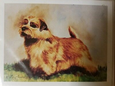 Dog Breed Note Cards NORFOLK TERRIER Best Friends by Ruth Maystead Pack of 4