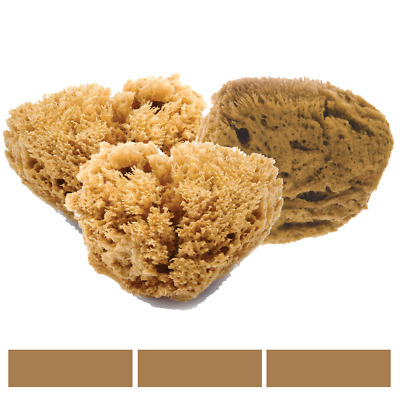 FacialCare Sea Sponges - 3x Large - Unbleached - Mediterranean Silk Sponge