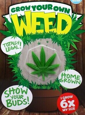"""GROW YOUR OWN WEED"" TOTALLY LEGAL!! - Just Add Water ""Grow Toy For Grown-Ups"""