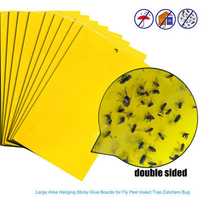 1~50 Large Yellow Sticky Insect Traps (25x15cm) Catch Flying Greenhouse Pests UK