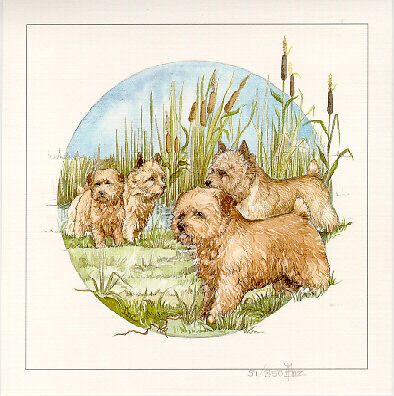 Cairn Terrier Limited Edition Print by Barbara Hands Boz LAST ONE