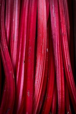 RHUBARB 'Sydney Crimson' 15+ seeds large sized stalks RED perennial vegetable