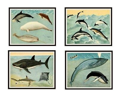 """Set of 4 Vintage Botanical Art Print Poster Reproductions """"Whales and Giant Fish"""