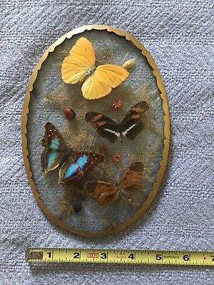 4 Real Framed Butterflies In Domed Glass