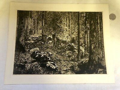 """Antique Engraving """"DEEP FOREST"""" Intricate Detail Look!"""