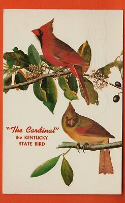 Kentucky State Bird/ male and female cardinal on branch/ chrome postcard