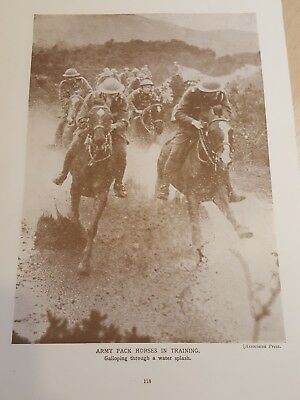 Pre WWII ANTIQUE PRINT- Post WW1 - Army pack horses in training