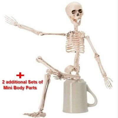 Posable Halloween Decoration Skeleton Full Body Skeleton With Movable Joints