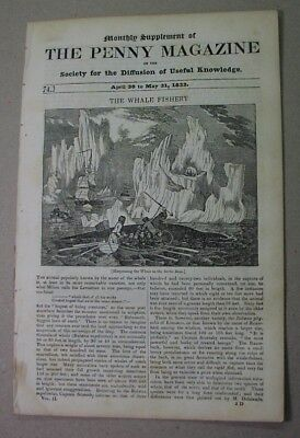 WHALING in 1833! the WHALE FISHERY, fine illusts.; harpoon & capsizing boats