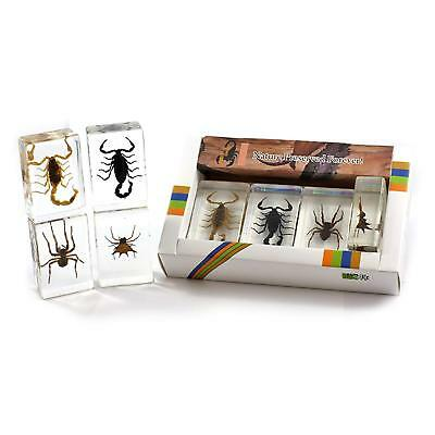 Real Scorpion & Spider Collection 4 pcs/Set Insect Acrylic Paperweight