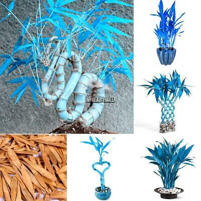 100Pcs Garden Indoor Bonsai Decorative Exotic Style Blue Bamboo Seeds MY8L 01