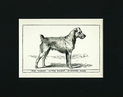 Dog Print 1900 Irish Terrier Dog ANTIQUE
