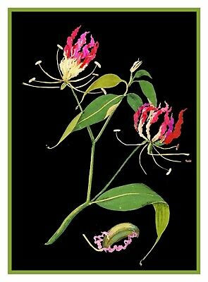 Flame Lily Flower inspired Mary Delany Counted Cross Stitch Pattern