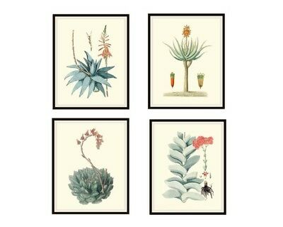 """Set of 4 Vintage Botanical Art Print Poster Reproductions """"Cactus and Succulents"""