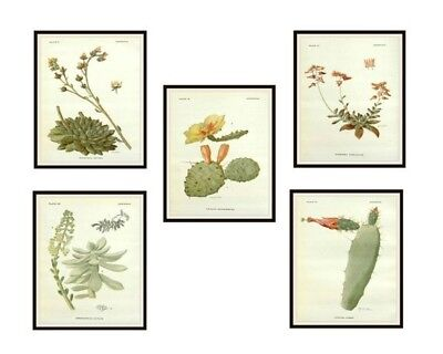 """Set of 5 Vintage Botanical Art Print Poster Reproductions """"Cactus and Succulents"""