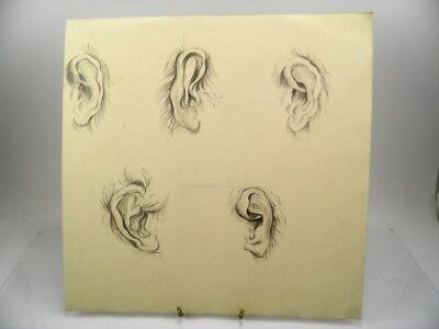 Antique late 19th century English School pencil drawing anatomical study the ear