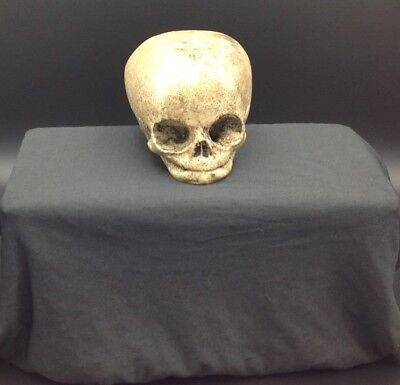 Miniature Baby Skull Solid Resin Filled Halloween Decoration