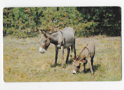 Vintage Postcard - Greetings From The Ozarks - Donkeys