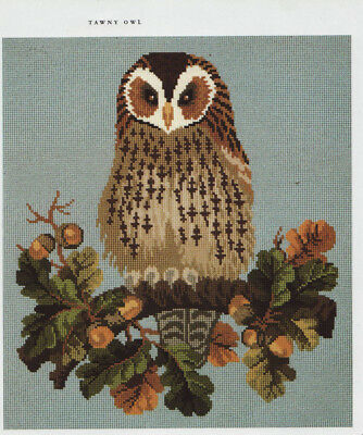 Tawny Owl Bird  Elizabeth Bradley Tapestry Needlepoint Chart in Colour