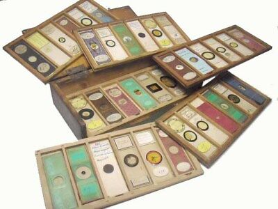 Cabinet of Antique Microscope Slides