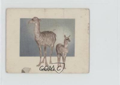 1951 Topps Animals of the World R714-1 #149 Vicuna Non-Sports Card 0s4