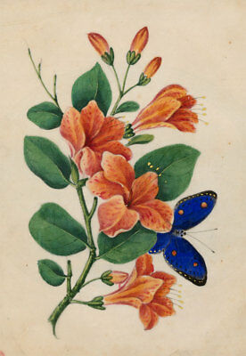 Fine Mid 19th Century Gouache - Lilies and a Blue Butterfly