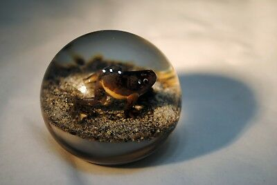Trabucco Art Glass Frog or Toad Paperweight 1993