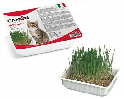 ERBA GATTA PRONTA ALL'USO CAMON GATTI GATTO CAT CATS 140 gr MADE IN ITALY