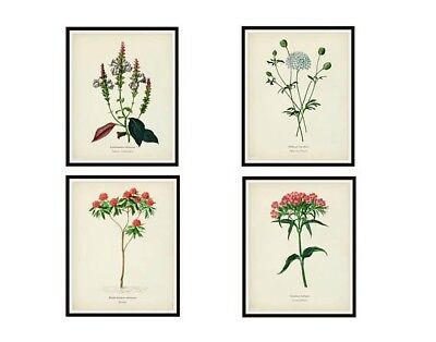 """Set of 4 Vintage Botanical Art Print Poster Reproductions by d'Orbigny, 8""""x10"""""""