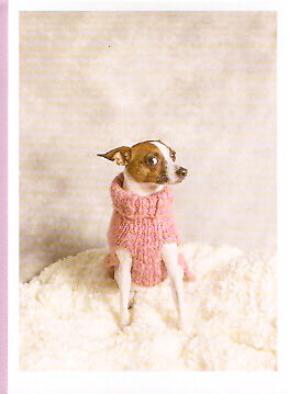 Chihuahua Dog in Sweater Christmas Cards Box of 10