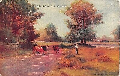 Farmer With Cows Grazing By The Roadside - 1908 Postcard - Art Series No. 237