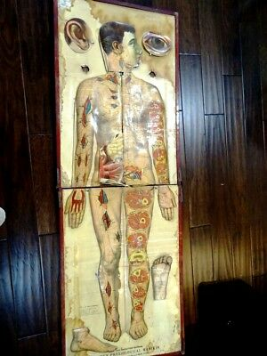 ANTIQUE medical ANATOMICAL MANIKIN knifeless dissecting LIFE SIZE +rare MANUAL +